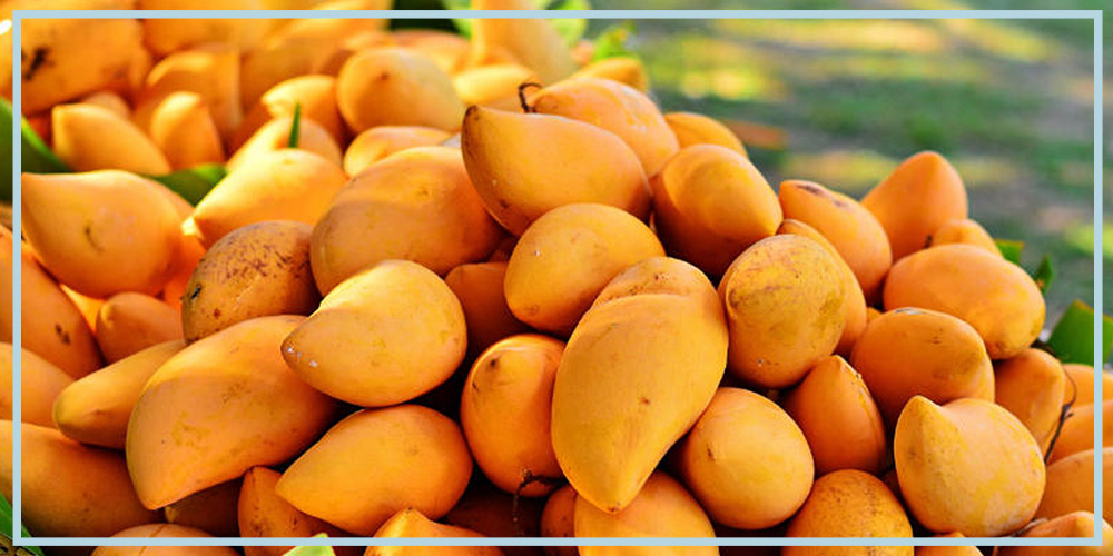 African mango supplement for weight loss