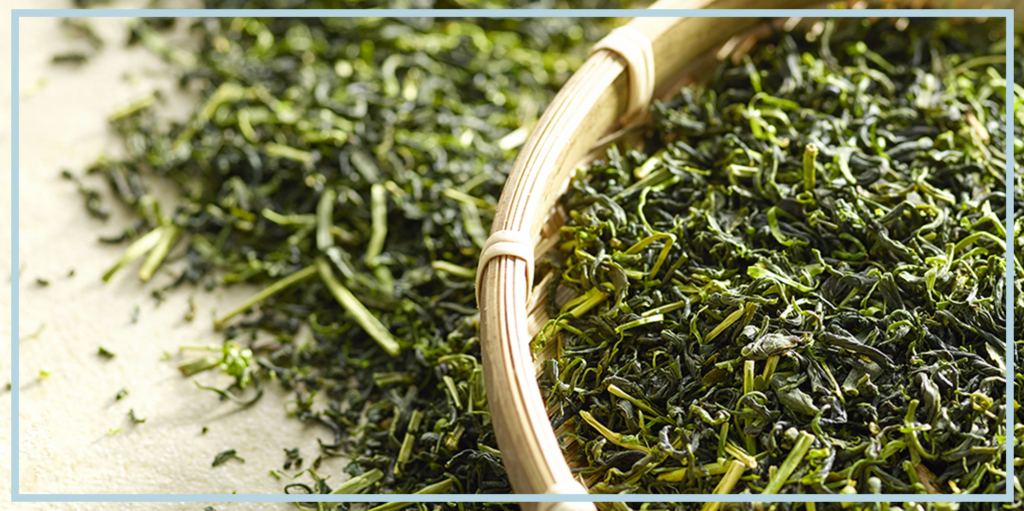 Green Tea Wiki: Benefits, Uses, Side Effects and Dosage